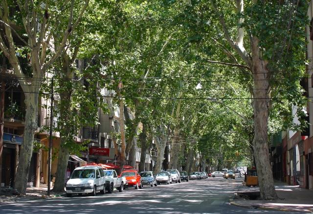 Beautiful tree-lined Mendoza.